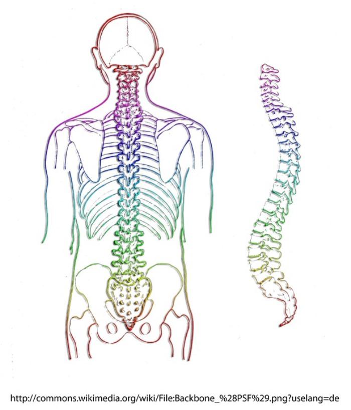 Orthopädische Untersuchung im Zentrum für Schmerzmedizin